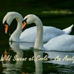 The Wild Swans at Coole by W.B. Yeats: A Detailed Analysis