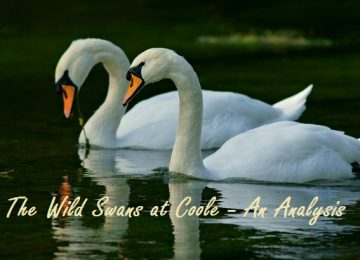 The Wild Swans at Coole Analysis
