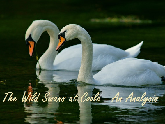 the wild swans at coole essay Discuss ways in which yeats explores a sense of loss in the wild swans at coole loss is part of the persistent and perpetual cycle of life, evident in the.