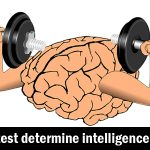 does IQ test determine intelligence